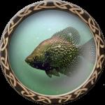 fishing_crappie