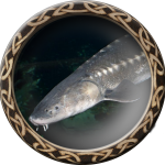 fishing_sturgeon